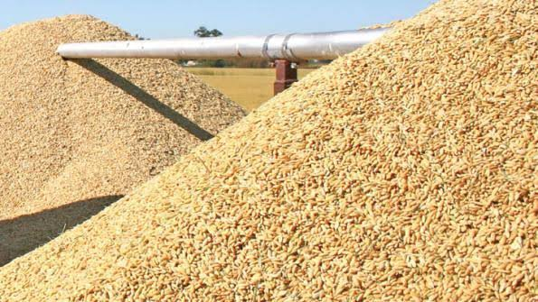 Rice production increased by 1.2 million metric tones - FG reveals