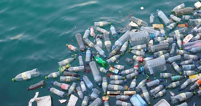 Marine environment experts decry impact of plastic on fish migration