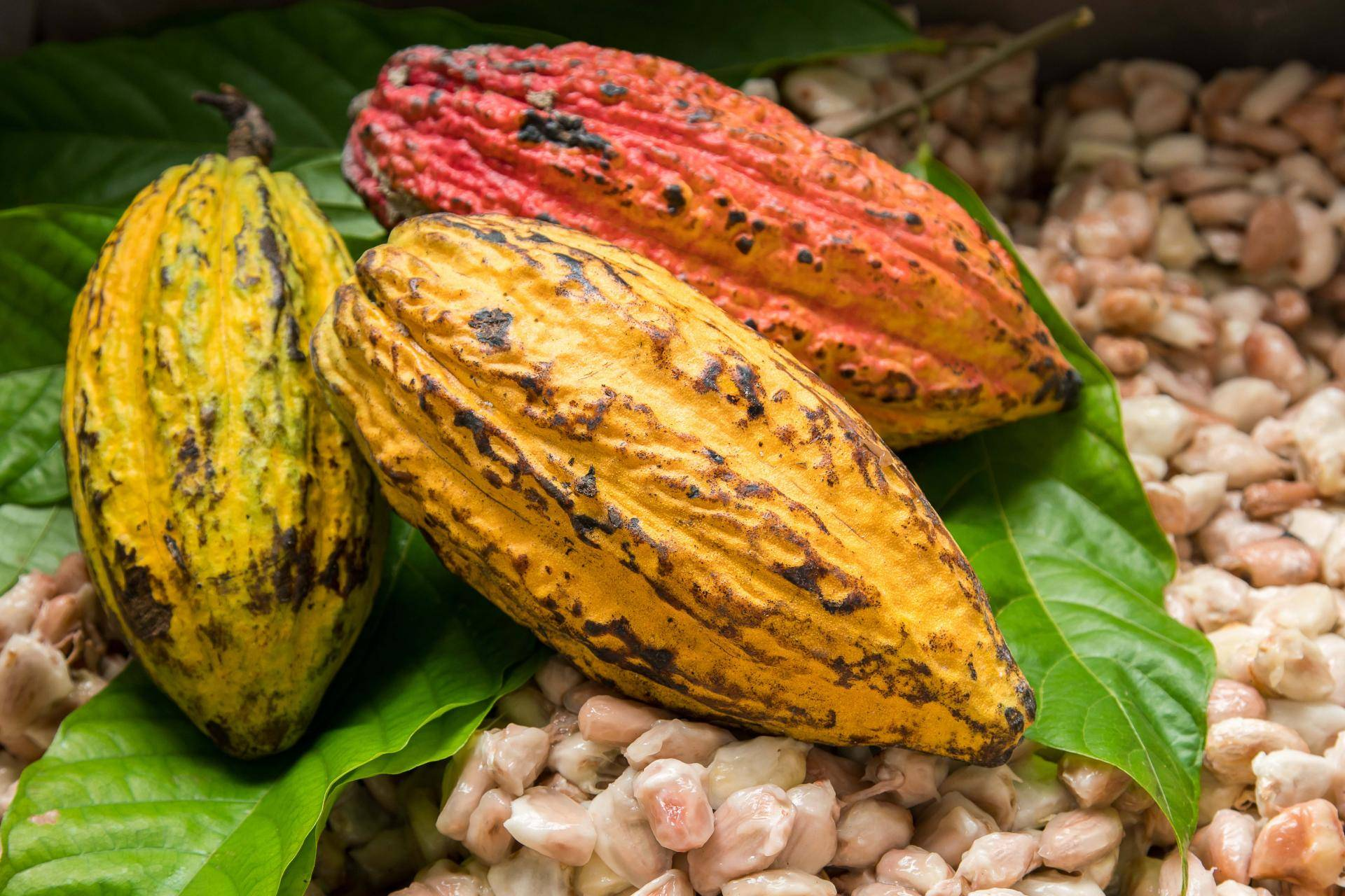 'Nigeria can export $3bn worth of cocoa derivatives through AfCFTA'