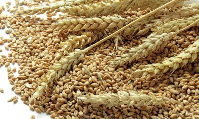 Nigeria spends $6.1bnon wheat importation yearly – WFAN