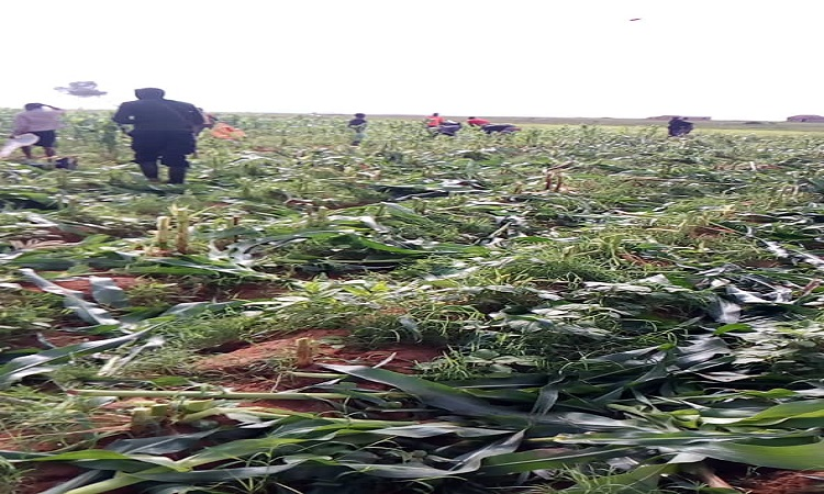 Vandalised Plateau farms could cause food insecurity -Gov. Lalong