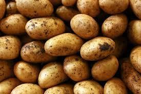 Plateau potato yield hits 960,000 metric tonnes per year