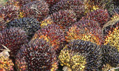 Golden seeds diversifies into biomass briquettes for export